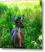 Young Deer Metal Print
