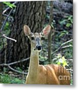 Young Doe At Side Of The Road Metal Print