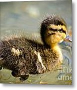 Young Duck Metal Print