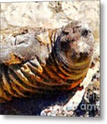 Young Elephant Seal  . 7d16091 Metal Print by Wingsdomain Art and Photography