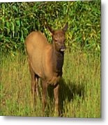 Young Elk Metal Print