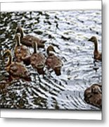 Young Geese Metal Print