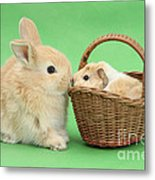 Young Rabbit With Baby Guinea Pig Metal Print