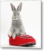 Young Silver Rabbit In A Knitted Slipper Metal Print