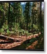Young Trees Metal Print