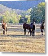 'youngsters In The Paddock' Metal Print by PJQandFriends Photography