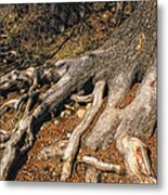 Your Roots Are Showing Metal Print