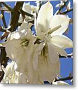 Yucca Flowers Metal Print