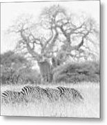 Zebra And Tree Metal Print