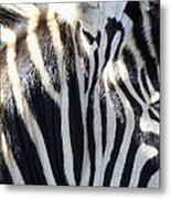 Zebra Face  Metal Print