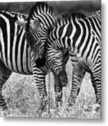 Zebra Hug 2 Metal Print