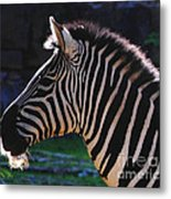 Zebra Profile Metal Print