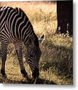 Zebra Take One Metal Print