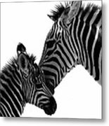 Zebras Mom And Baby Metal Print