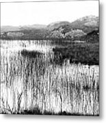 Zen Pond In Ireland Metal Print
