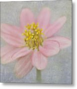 Zinnia In The Garden Metal Print
