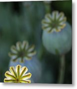 After The Flower 3 Metal Print