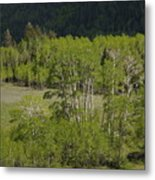 Aspen Meadows IIi Metal Print