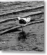 Bird Walk Metal Print