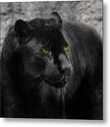 Black Leopard Metal Print