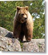 Brown Bear 4 Metal Print