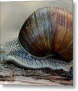 Burgundy Snail Metal Print