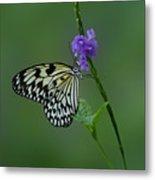Butterfly On Flower  Metal Print by Sandy Keeton