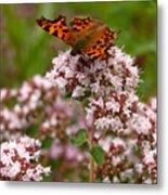 Comma Butterfly Metal Print