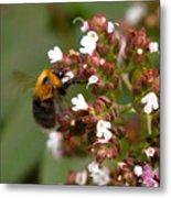 Cuckoo Bumblebee Metal Print