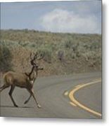 Deer 1 Metal Print