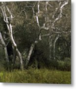 Dv Creek Trees Metal Print