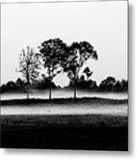 Evening Mist Black And White Metal Print