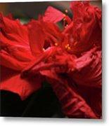 Flamenco Flower Metal Print