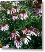 Flowers For Butterfly Feasting Metal Print