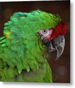 Great Green Macaw Ara Ambiguus Metal Print