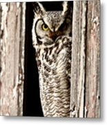 Great Horned Owl Perched In Barn Window Metal Print by Mark Duffy
