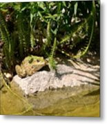 Green Frog Sitting At The Pond Metal Print