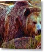 Grizzly Bear In Rocks Metal Print