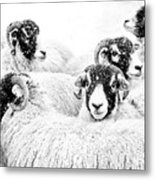 In Winters Grip Metal Print