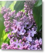 Lilacs On A Misty Morning Metal Print