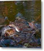 Mixed Frogs Metal Print