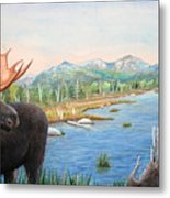 Moose At Baxter State Park Metal Print