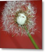 Nature Red Metal Print