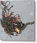 Natures Teapot # 2 Metal Print