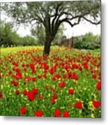 Olive Amongst Poppies Metal Print