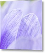 Purple Anemone Flower  Metal Print