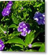 Purple Flowers In Pilgrim Place In Claremont-california Metal Print