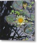September White Water Lily Metal Print