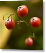 The Berries Of The Lily Of The Valley Metal Print