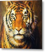 Tiger Head, Color Oil Painting On Canvas. Metal Print